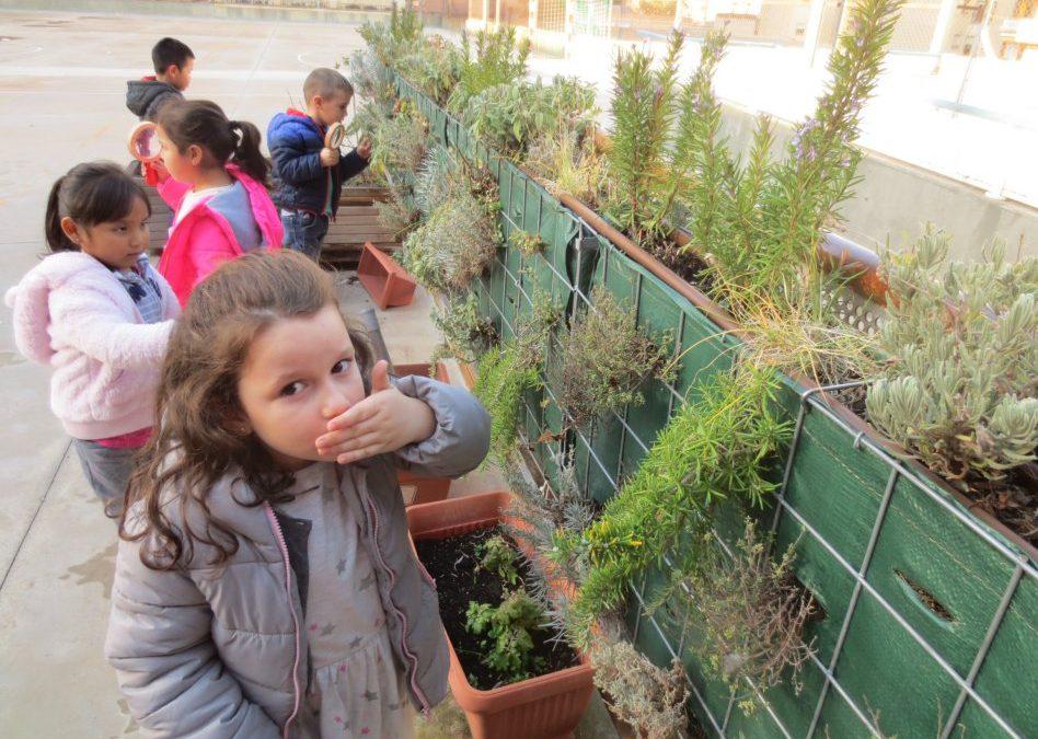"Projecte: ""Les plantes"" (Educació Infantil)"
