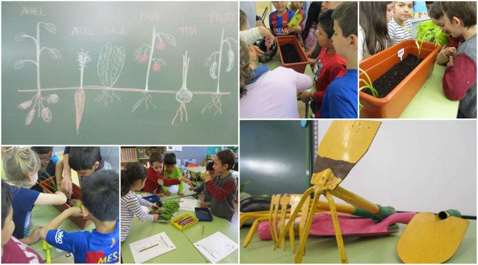 Escola_L'Estel_Collage_hort_aula