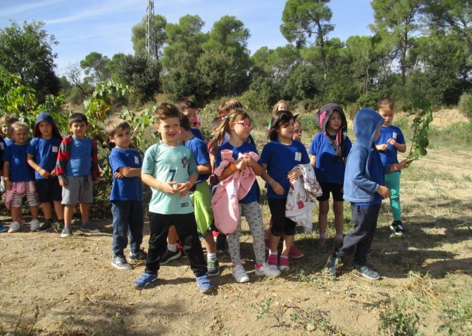 "La verema a ""Can Ribas de Montbui"" .. (Ed.Infantil i Cicle Inicial)"